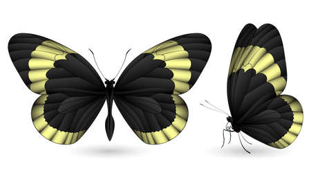 Set of colorful butterflies. Front and side view