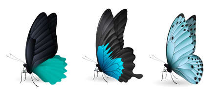 Set of colorful realistic butterflies