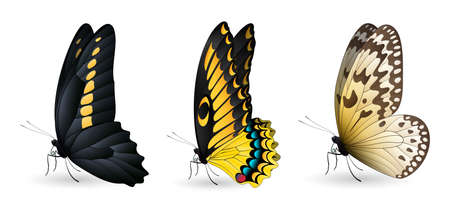 Set of colorful realistic butterflies. Vector 3D illustration