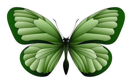 Beautiful butterfly isolated illustration.
