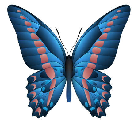 Beautiful butterfly isolated on a white  illustration.