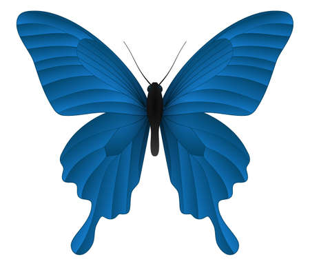 Papilio thoas or the king swallowtail butterfly isolated on a white background. Vector 3D illustration