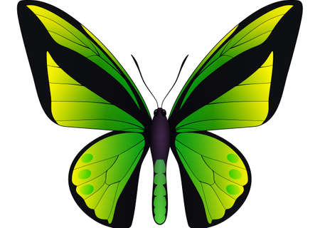 Beautiful butterfly isolated on a white background. Vector 3D illustration Illustration