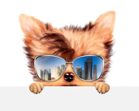 Funny Dog wearing sunglasses behind banner Фото со стока