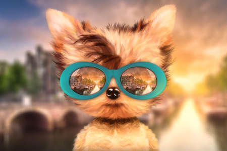 Dog in sunglasses stand in front travel background Stock Photo