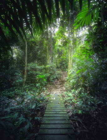 Tropical jungles with pathway in Borneo, Southeast Asia