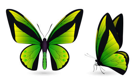 Set of butterflies isolated on white background Illustration