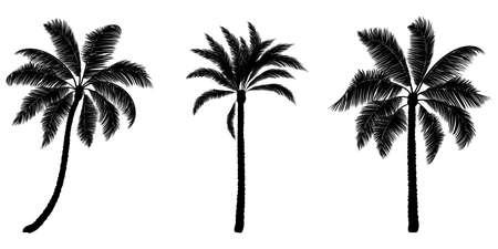 Set of black vector palm. Hand drawn trees.