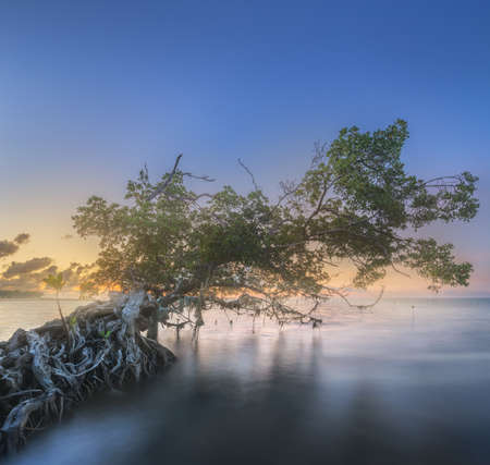 Tree over the water and coast of Borneo beach Reklamní fotografie