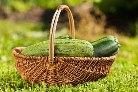 fresh zucchini in basket