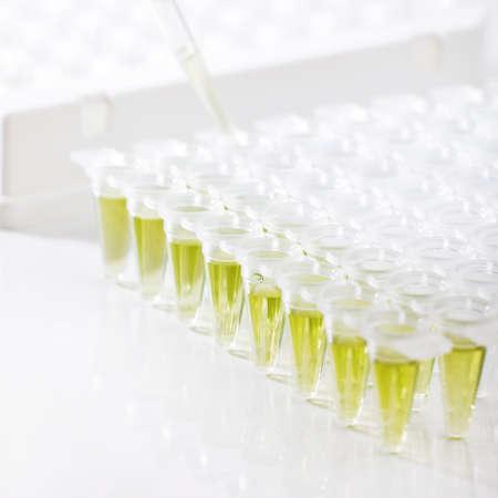 amplification: Tubes en plastique pour l'amplification de l'ADN et pipette de chargement
