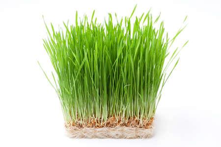wheat grass: wheat grass