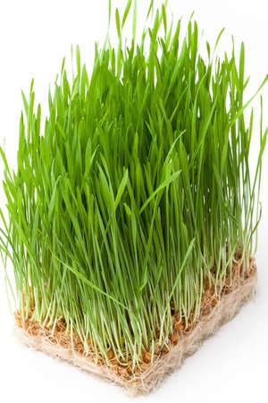 D'herbe de blé Banque d'images - 25567198