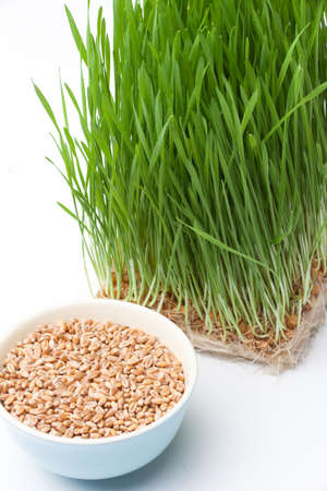 wheat grass and wheat in bowl composition photo