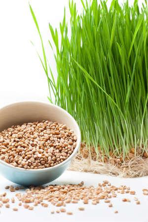 Herbe de blé et de blé dans la composition de bol Banque d'images - 25567201