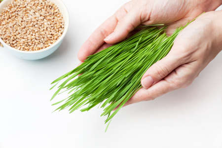 cut wheat grass in hands Stock Photo