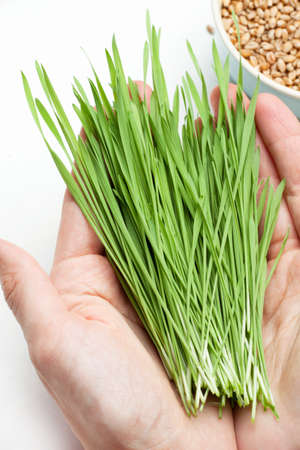 wheat grass in hands