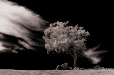 infra red: Tree in field with cloudscape, infra red