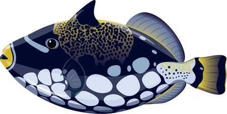 Les poissons tropicaux Balistoides conspicillum, isolé sur blanc, illustration vectorielle, eps-10 Vecteurs