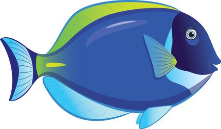 Tropische Fische Acanthurus Leucosternon, isoliert auf weiß Illustration