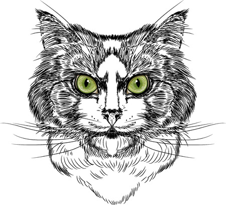 eyed: Portrait of Domestic green eyed Cats, sketch, isolated on white illustration Illustration