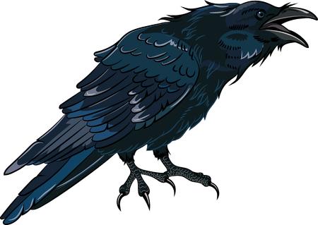 Schwarze Krähe, die auf weiß, Vektor-Illustration isoliert krächzt, eps-10