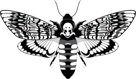 moth: Dead head moth black and white, vector illustration, eps-10