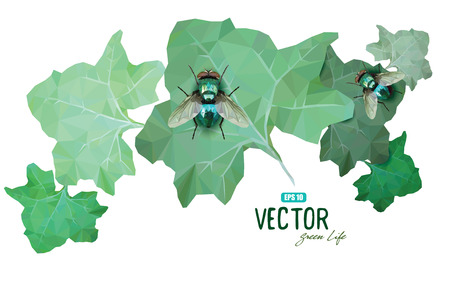 disgusting animal: Emerald polygonal fly sitting on a green leaves, vector illustration, eps-10 Illustration