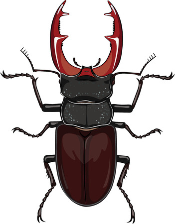 Beetle stag isolated on white, vector illustration, eps-10