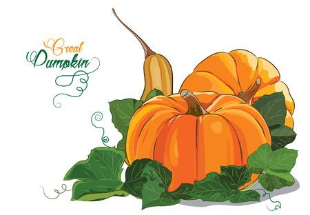 Pumpkin. Three big ripe pumpkin green pumpkin leaves, isolated on white, vector illustration