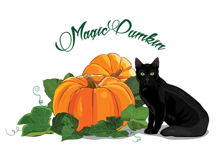 Pumpkin and black cat. Black green-eyed cat and a beautiful ripe pumpkin. Halloween design, isolated on white, vector illustration, eps-10