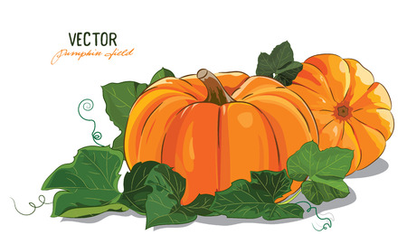 Pumpkin. A big ripe pumpkin green pumpkin leaves, isolated on white, vector illustration