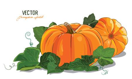 Citrouille. Une grande citrouille mûre vert feuilles de citrouille, isolé sur blanc, illustration vectorielle