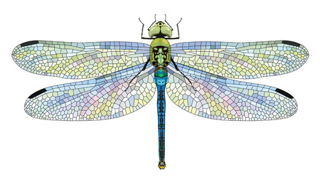 Dragonfly Aeschna Viridls con le ali colorate bello, isolato su bianco, illustrazione vettoriale, eps-10