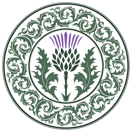 Thistle flower and ornament round leaf thistle. The Symbol Of Scotland, isolated on white, vector illustration Vettoriali