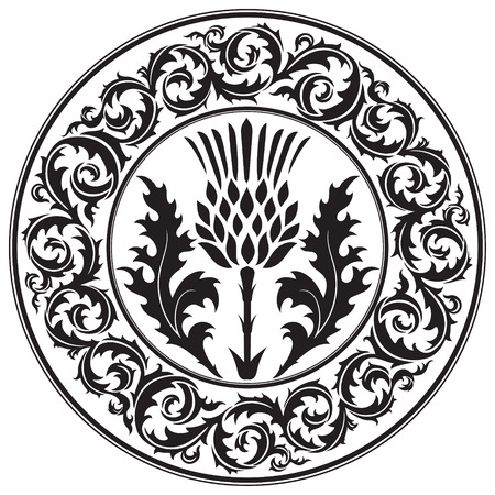 Thistle flower and ornament round leaf thistle. The Symbol Of Scotland, isolated on white, vector illustration Çizim