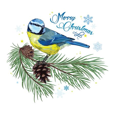 chickadee: Christmas card. Titmouse sitting on pine branch with cones and snowflakes, isolated on white, vector illustration