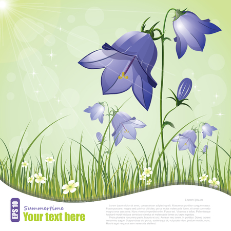 Campanula, flower bell vector illustration, eps-10