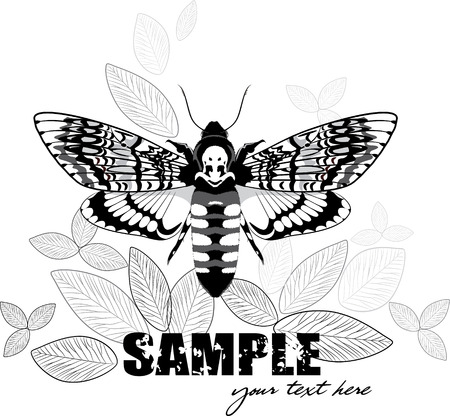 Leaf design with Dead head moth, vector illustration