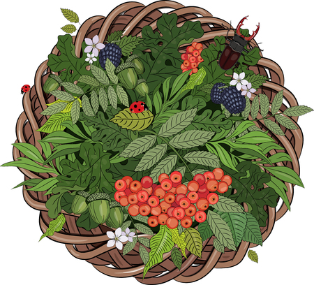 A wreath of rattan in the leaves and beetle deer, isolated on white, vector illustration, eps-10 Illustration
