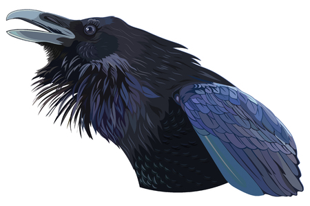 Cawing black crow Vector illustration.
