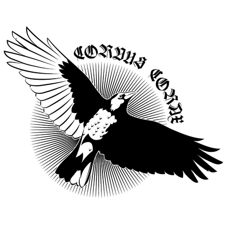 Flying Mighty Black Raven, crow, raven in flight