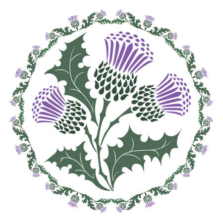 Thistle flower and ornament round leaf thistle. The Symbol Of Scotland Vetores