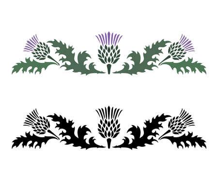 Thistle. Onopordum acanthium. Scottish Thistle Vettoriali