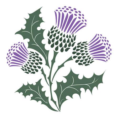 Thistle. Onopordum acanthium. Scottish Thistle Vektorgrafik