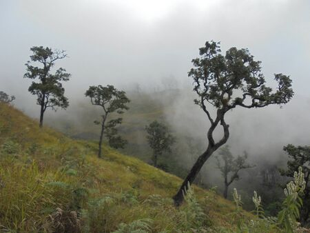 ascent: trees in the fog during the ascent of Rinjani volcano on the island of Lombok in Indonesia.