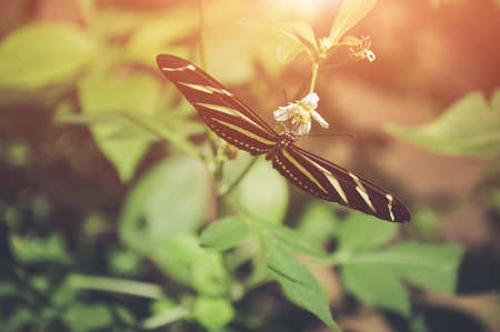Butterfly in nature. Shallow Depth of field with instgram themed filter.