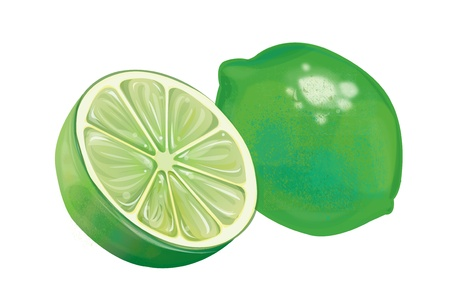 lime slice: Lim�n fresco close up ilustraci�n Vectores