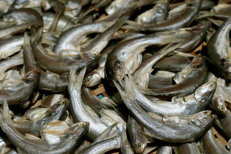 Mackerel fish at market, Thailand photo
