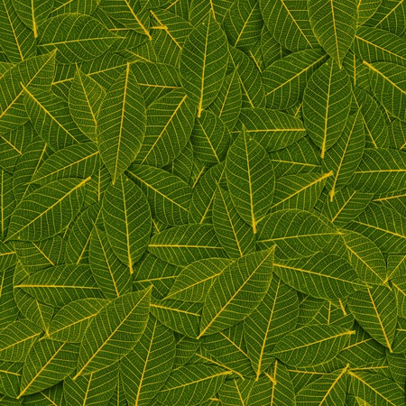 yellow green transparent leaf pattern Stock Photo - 16241122